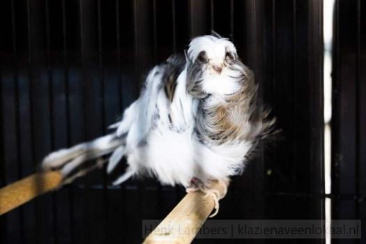 Vogelvereniging-Klazienaveen