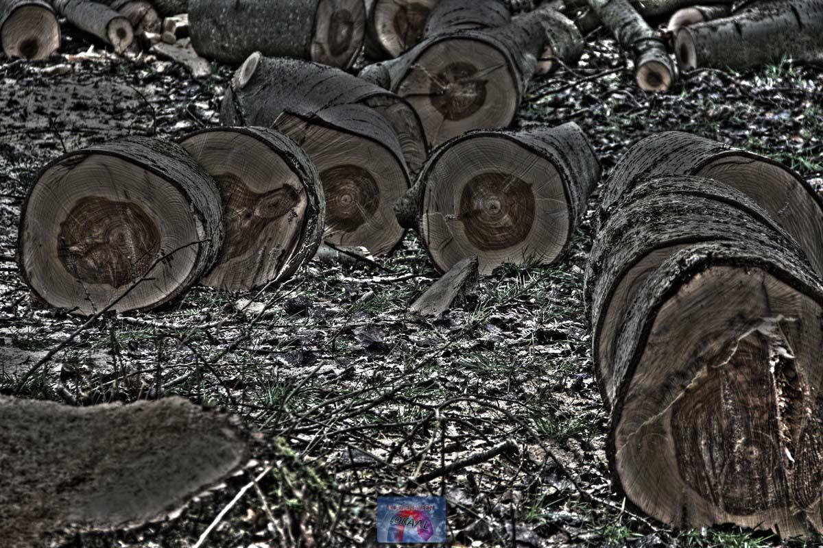 Bomen_gezaagd-2web