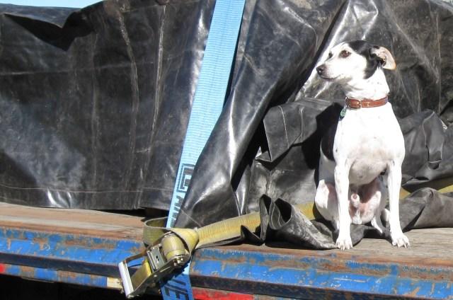 Dog next to steel shipment