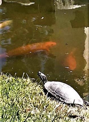 turtlesun