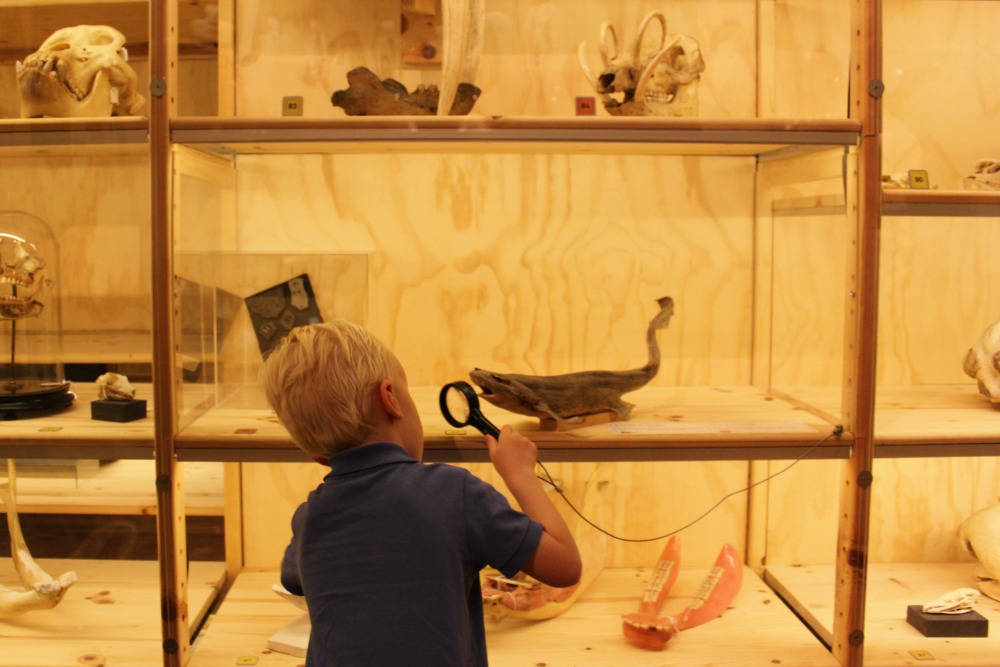 Universiteitsmuseum Utrecht + de Oude Hortus