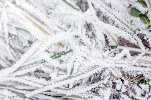 Babybauchfotos im Winter bei Frost Fotografin Ludwigsburg