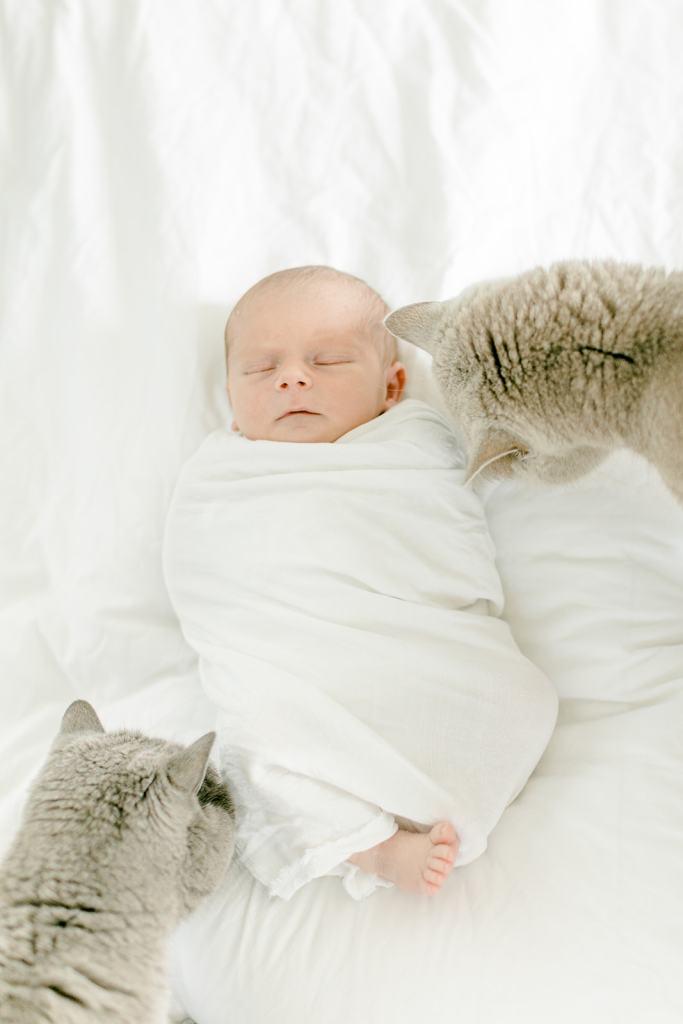 Katzen und Baby Newbornshooting