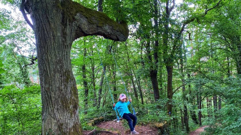 Drachentelstour Waldschaukel