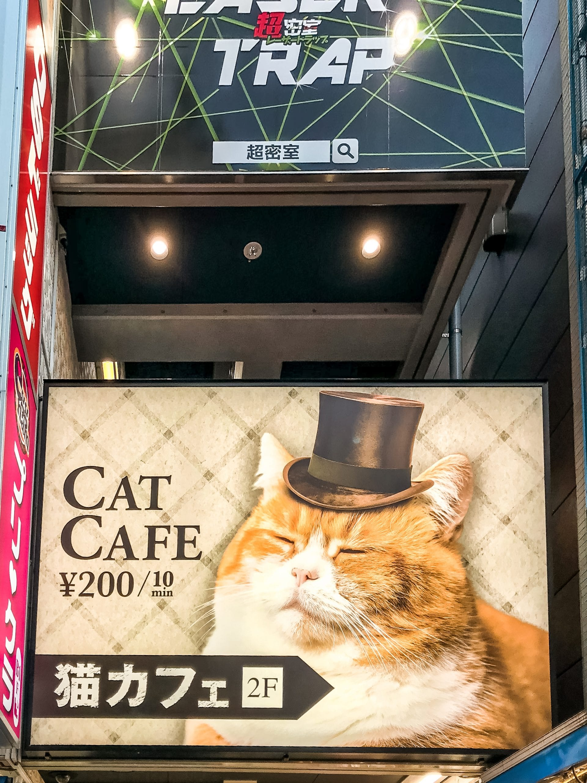 Themencafe Cat Cafe Japan Streichelcafé