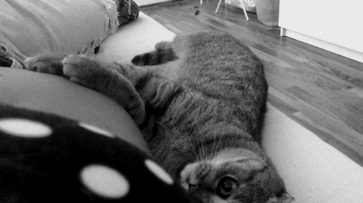 Schwangerschaftsbauch Katze
