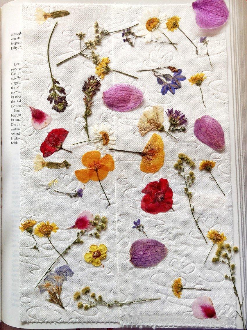Blumen pressen ist ganz einfach. Was man aus den gepressten Blüten basteln kann, zeige ich euch in meinem Blogbeitrag