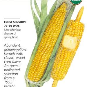 Corn Sweet True Gold