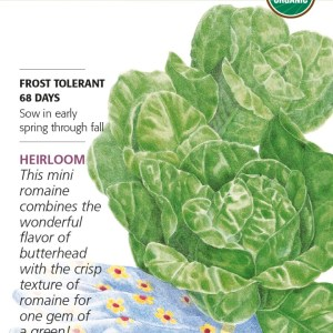 Lettuce Romaine Little Gem Org
