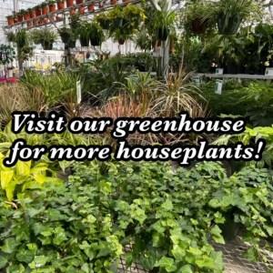 more houseplants