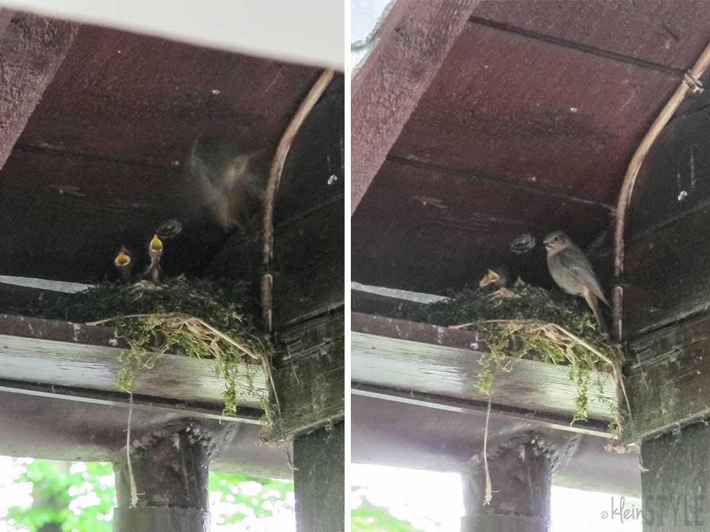 Muttergefuehle-Faszination-Natur-Vogelnest