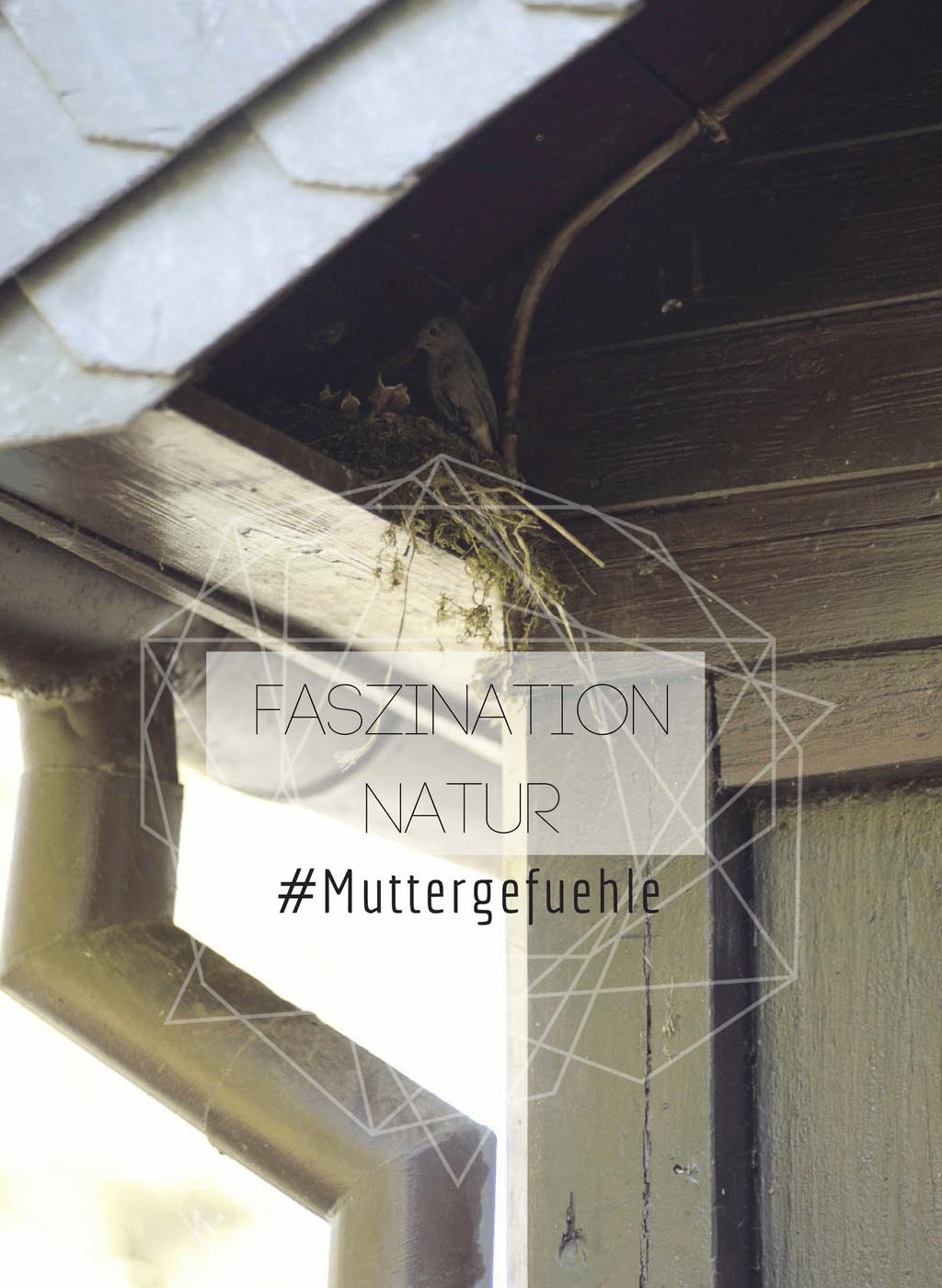 #muttergefuehle faszination natur vogelnest by kleinstyle.com