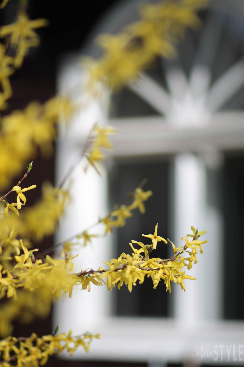 Frühling : Zeit der Familien-Feierlichkeiten