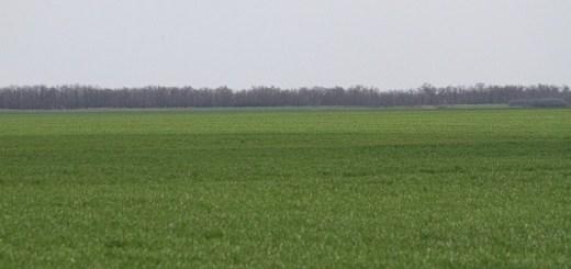 Аграрии Волгоградской области приступили к подкормке озимых