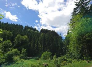 Weg zum Falkenstein