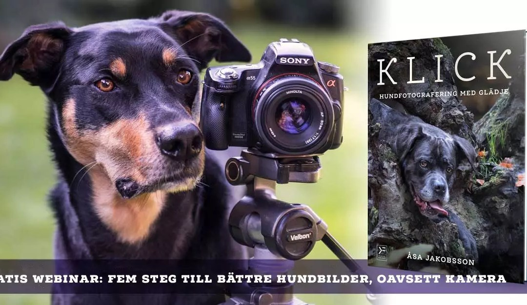 Gratis webinar: Fem steg till bättre hundbilder, oavsett kamera – Åsa Jakobsson
