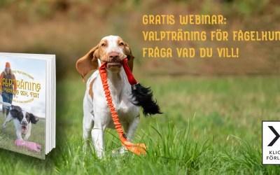 Gratis webinar: Valpträning för fågelhundar – fråga vad du vill! – Elsa Blomster & Lena Gunnarsson