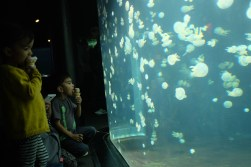 I was not the only fan of the jellyfish