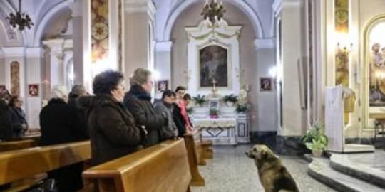 3. Anjing ini setia datangi gereja tempat majikannya pernah disemayamkan