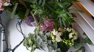 Other indoor plant looking healthy