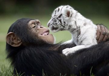 #2 Tieto zvieracie páry sa kamošia. Je to vôbec možné?