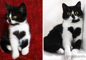 Milujete mačky? Toto je zopár fotografií pred tým a potom, čo sa z mačiatka stala šelma