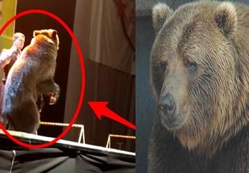 Zvieratá v cirkusoch sú TÝRANÉ! Dokazuje to aj video s medveďom, ktorý po vzbure dostal palicou a musel pokračovať vo vystúpení