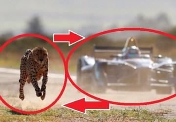 Neuveriteľný súboj techniky a prírody: Pozrite si preteky medzi gepardom a špičkovou formulou