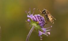 Neveselá správa pre alergikov: Peľová sezóna je v plnom prúde