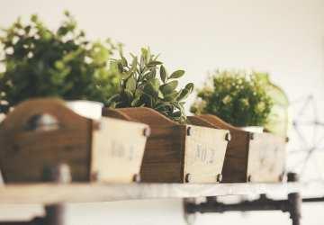 Záhrada v byte: Na čo si dávať pozor, ak pestujete bylinky v interiéri