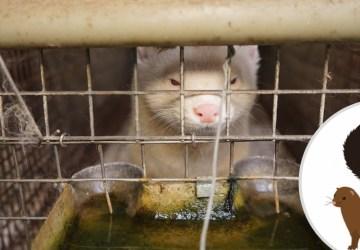 IDE O CHLP: Stop kožušinovým farmám? Aktivisti poukazujú na obrovský problém, spustili petíciu