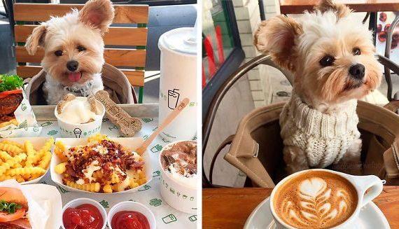 Do reštaurácií bude možné vstúpiť aj s domácim zvieraťom, nastavené sú však tieto pravidlá