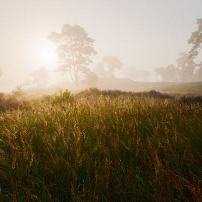 zonsopkomst mist veluwe