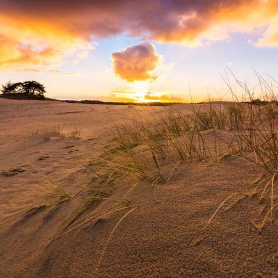 Sunset hulshorsterzand Veluwe