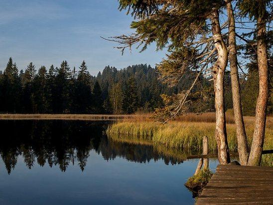 Arboles alrededor de un lago