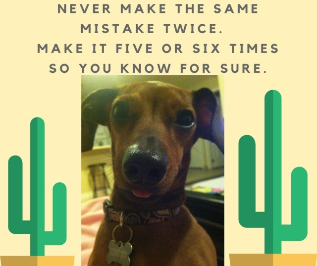 Sage Weenie Wednesday always has great words of advice!