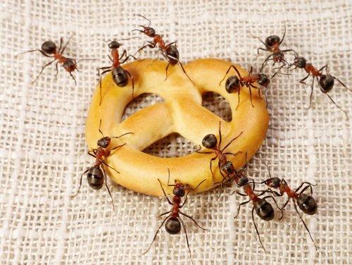 Кто ест муравьев в природе