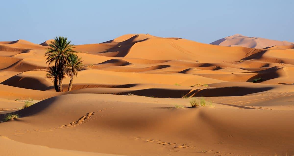 Kamelreiten in der Sahara, Marokko