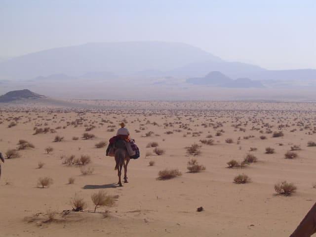 Meditativer Kameltreck in der Wüste Sinai
