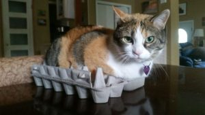 Crank Cat in egg carton