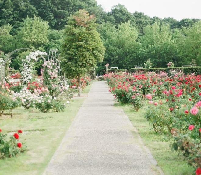 Achtertuin laten onderhouden door tuinman