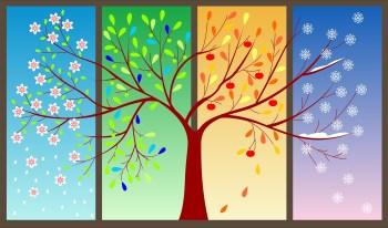 Four Seasons of a Tree