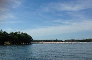 Pelicans Ten Thousand Islands via KLWightman.com