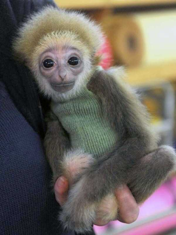 animals in sweaters 18 Adorable Animals Wearing Sweaters (35 photos)