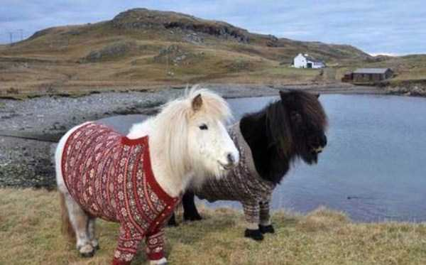 animals in sweaters 2 Adorable Animals Wearing Sweaters (35 photos)