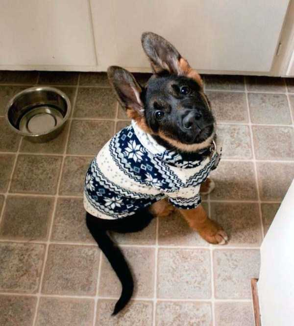 animals in sweaters 20 Adorable Animals Wearing Sweaters (35 photos)