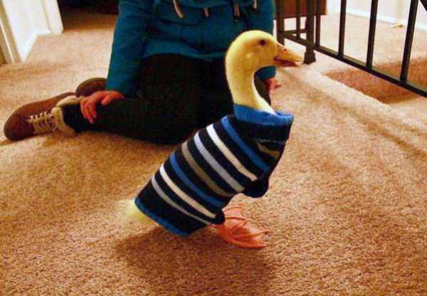 animals in sweaters 23 Adorable Animals Wearing Sweaters (35 photos)