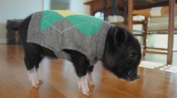 animals in sweaters 26 Adorable Animals Wearing Sweaters (35 photos)