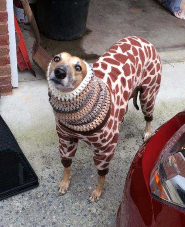 animals in sweaters 28 Adorable Animals Wearing Sweaters (35 photos)
