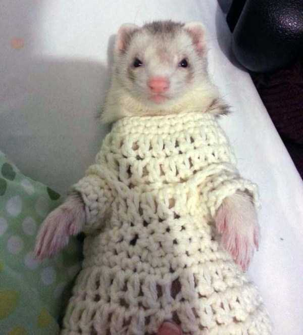 animals in sweaters 3 Adorable Animals Wearing Sweaters (35 photos)